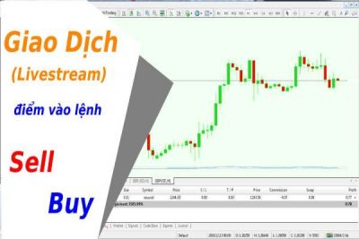 Học Giao Dịch Forex | Thầy Phải Hướng Dẫn Giao Dịch Live